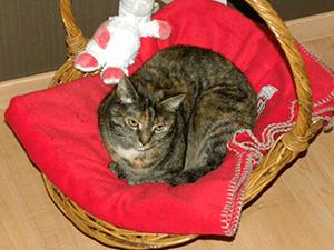 Kattenverzorging aan huis
